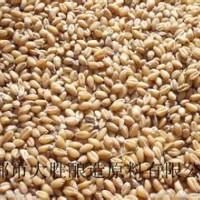 四川常年求购玉米高梁小麦碎米大米糯米木薯淀粉