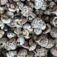 昌盛寶菇河南靈寶天白花菇廠家批發直供