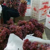陕西红提葡萄种植基地,红提葡萄产地,红提葡萄价格