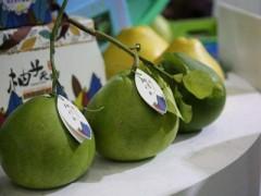 海南澄迈:无籽蜜柚首次出口(图)