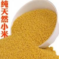 求购五谷杂粮小米.高梁.燕麦.玉米.大米