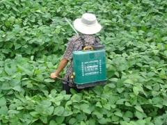 澳门大学成功研发对人无害除草剂(图)