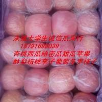 陕西红富士苹果批发优质膜袋红富士苹果基地价格