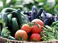 山西晋城一周蔬菜价格分析(图)