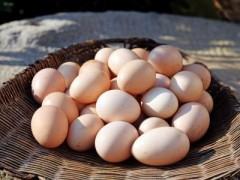 重庆:土鸡蛋价格飙升 从10元一斤到15元一斤(图)