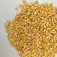 四川蜀窖酿酒公司现款求购玉米小麦碎米糯米木薯淀粉高梁量大