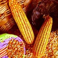 华联酒厂求购糯米高粱玉米大米淀粉豆类碎米小麦等原料