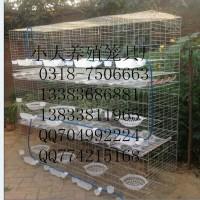 出售12位鸽笼 16位鸽笼 兔子笼 宠物笼 鸡笼 鸽笼