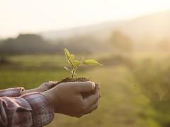 南通绿色兴农 减肥增产效益高(图)