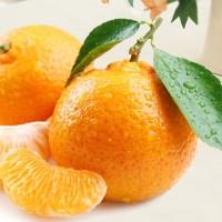 哪里的椪柑最甜?/屏山鲜甜椪柑、橘子、丑柑  批发零售