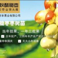 适合南方种植的枣树苗