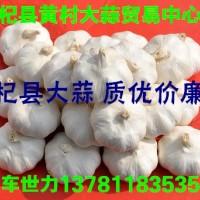 常年供应杞县各种大蒜(市场蒜-印尼蒜-扒米蒜-脱水蒜)