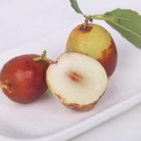 贵州苗木新品种批发——祁东酥脆枣