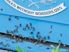 走进蜜蜂王国(图)