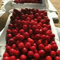 陕西萨米脱樱桃批发大荔美早樱桃先锋樱桃产地价格