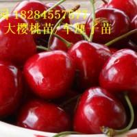 四川大樱桃苗价格,大樱桃树苗多少钱一株?