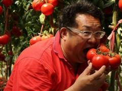 走遍全国 蔬菜大棚还得看寿光!(图)