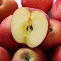求购苹果.梨.芒果.石榴.猕猴桃.蜜桔.脐橙.柚子.柠檬