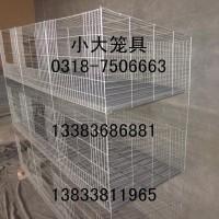 售9位母兔笼 12位仔母兔笼 鸽子笼 鹧鸪笼 小鸡笼运输笼