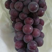 陕西户太八号葡萄批发户太八号葡萄产地价格