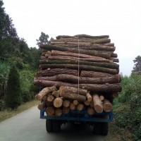 高性能毛竹运输车