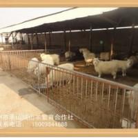 优良的绒山羊营口哪里有-鞍山绒山羊