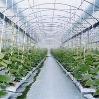 便宜的溫室大棚_蘭州溫室大棚專業建設