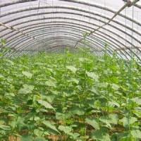 淄博蔬菜温室-高质量的蔬菜温室大棚建设推荐