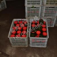 濟南香椿咸菜|實力可靠的紅香椿咸菜經銷商
