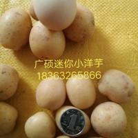 口碑好的厦门迷你小土豆供应 杨浦本地迷你小土豆