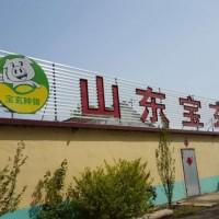 新美系长白种猪|潍坊品牌好的提供商,新美系长白种猪