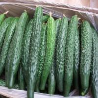 蔬菜配送哪家好_专业的食材配送服务提供