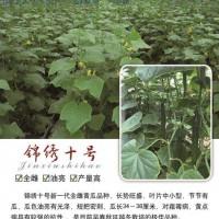 安徽锦绣十号黄瓜种子-黄瓜种子认准泰和锦绣种业